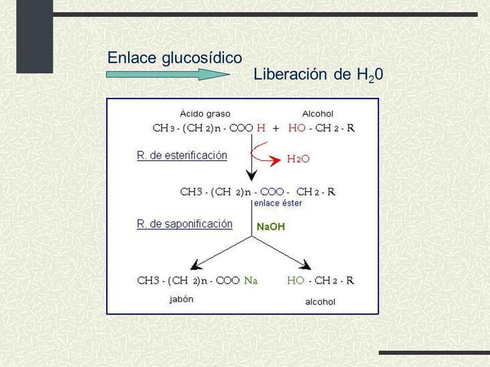 Enlace glucosídico Liberación de H20
