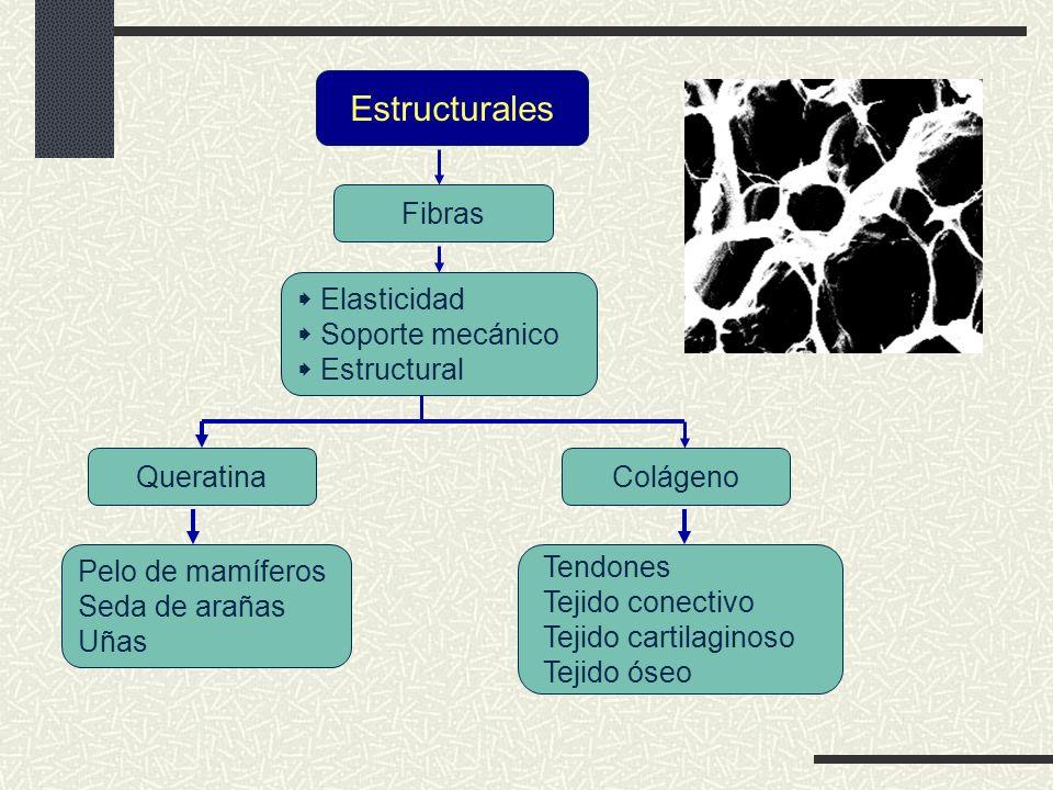 Estructurales Fibras  Elasticidad  Soporte mecánico  Estructural