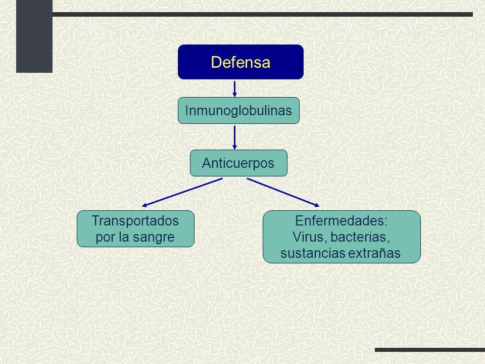 Defensa Inmunoglobulinas Anticuerpos Transportados por la sangre