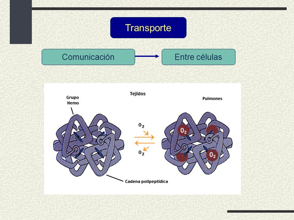 Transporte Comunicación Entre células