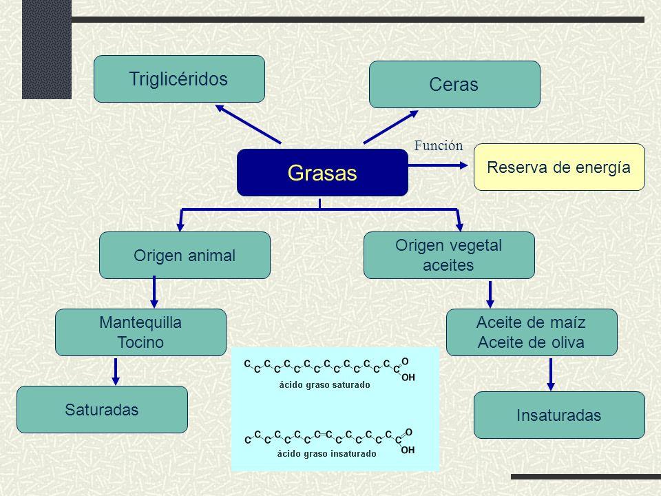 Grasas Triglicéridos Ceras Reserva de energía Origen animal