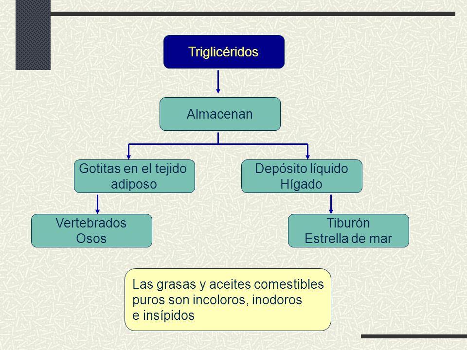 Triglicéridos Almacenan. Gotitas en el tejido. adiposo. Depósito líquido. Hígado. Vertebrados.