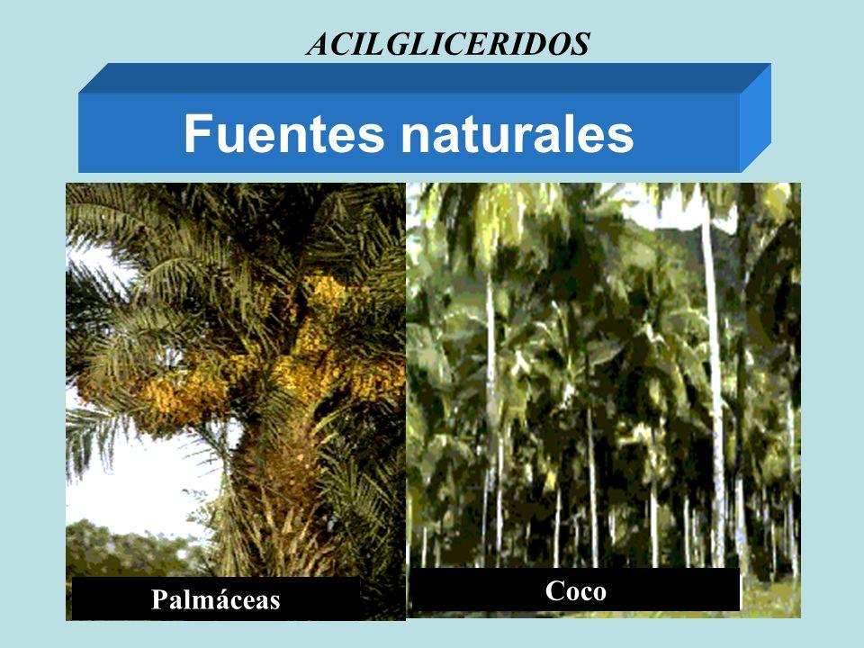 ACILGLICERIDOS Fuentes naturales Palmáceas Coco