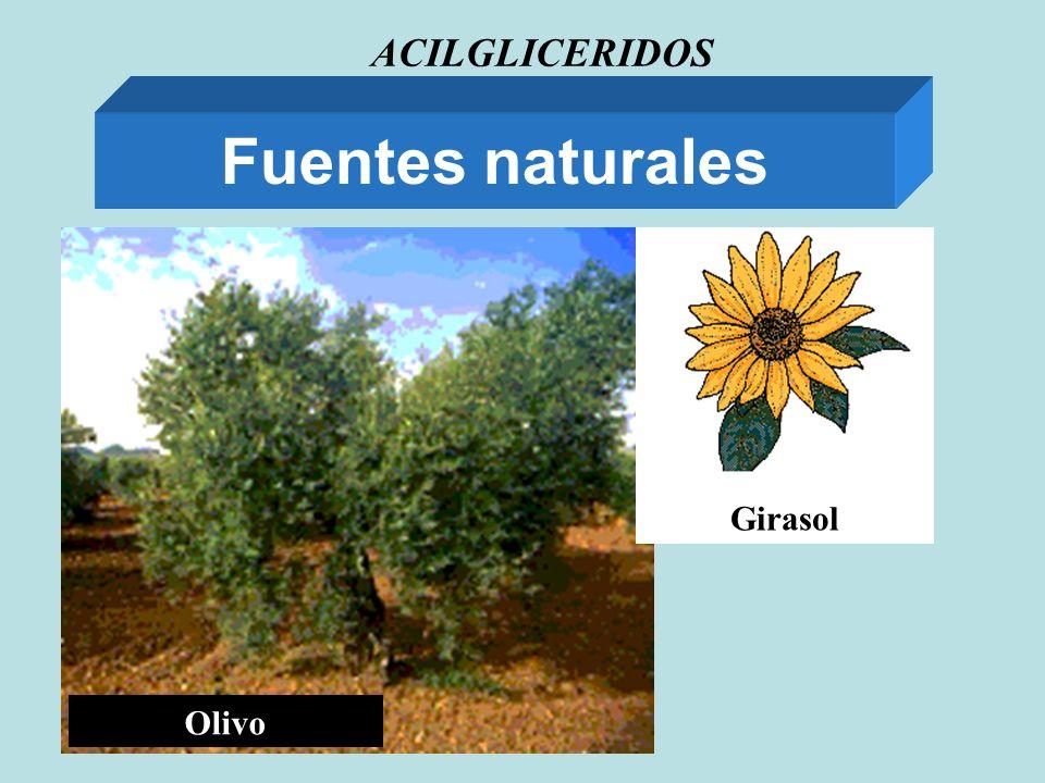 ACILGLICERIDOS Fuentes naturales Olivo Girasol