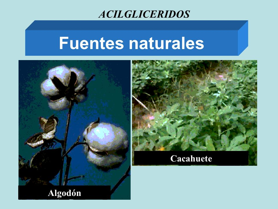 ACILGLICERIDOS Fuentes naturales Algodón Cacahuete