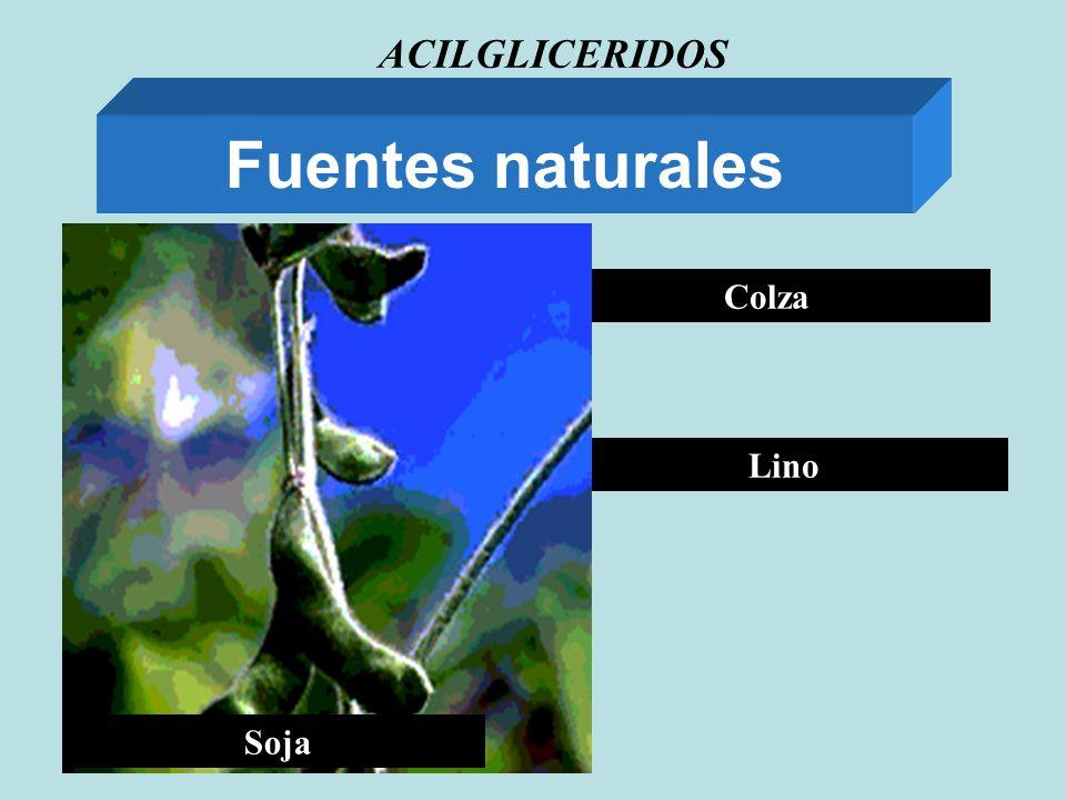 ACILGLICERIDOS Fuentes naturales Soja Colza Lino