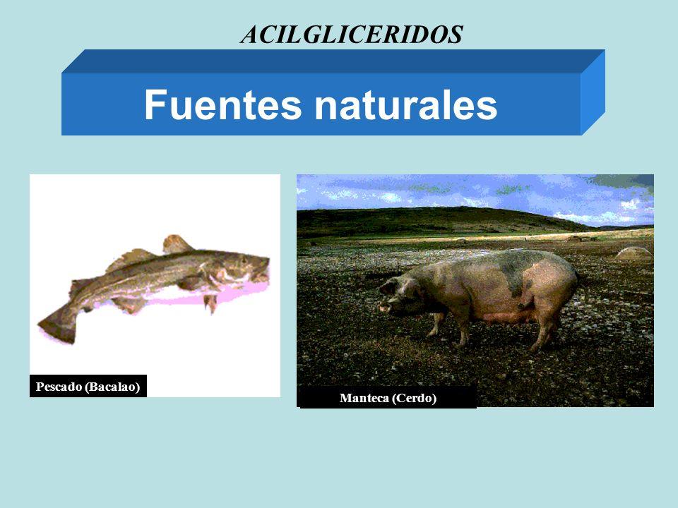 ACILGLICERIDOS Fuentes naturales Manteca (Cerdo) Pescado (Bacalao)