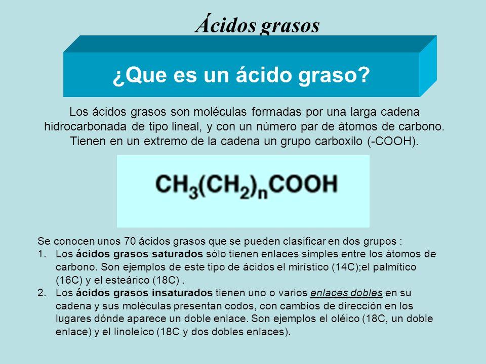 Ácidos grasos ¿Que es un ácido graso