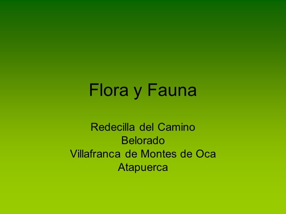 Redecilla del Camino Belorado Villafranca de Montes de Oca Atapuerca