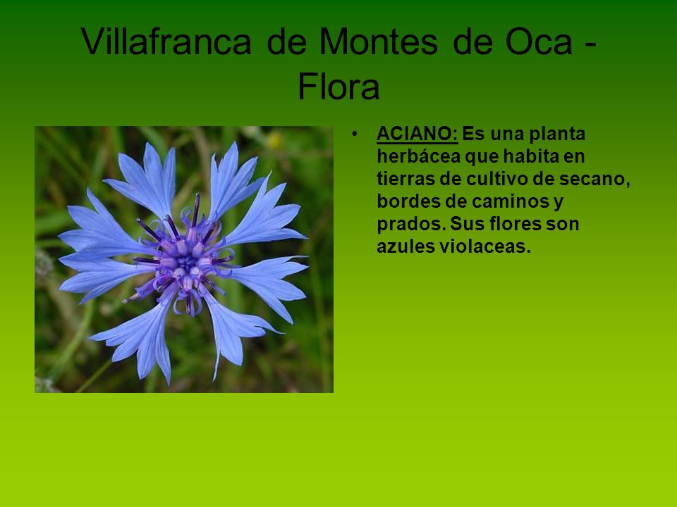 Villafranca de Montes de Oca - Flora