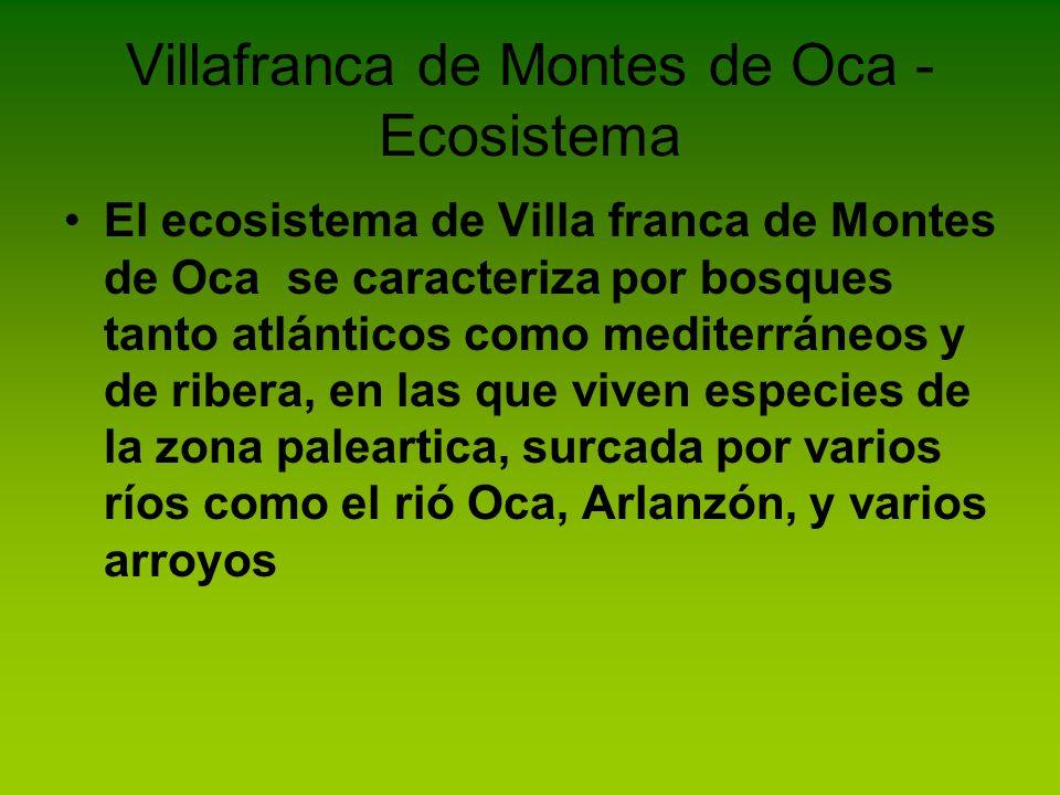 Villafranca de Montes de Oca - Ecosistema
