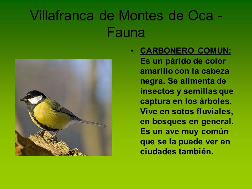 Villafranca de Montes de Oca - Fauna