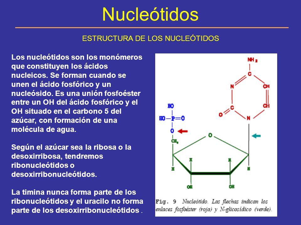 ESTRUCTURA DE LOS NUCLEÓTIDOS