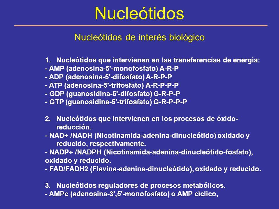 Nucleótidos de interés biológico