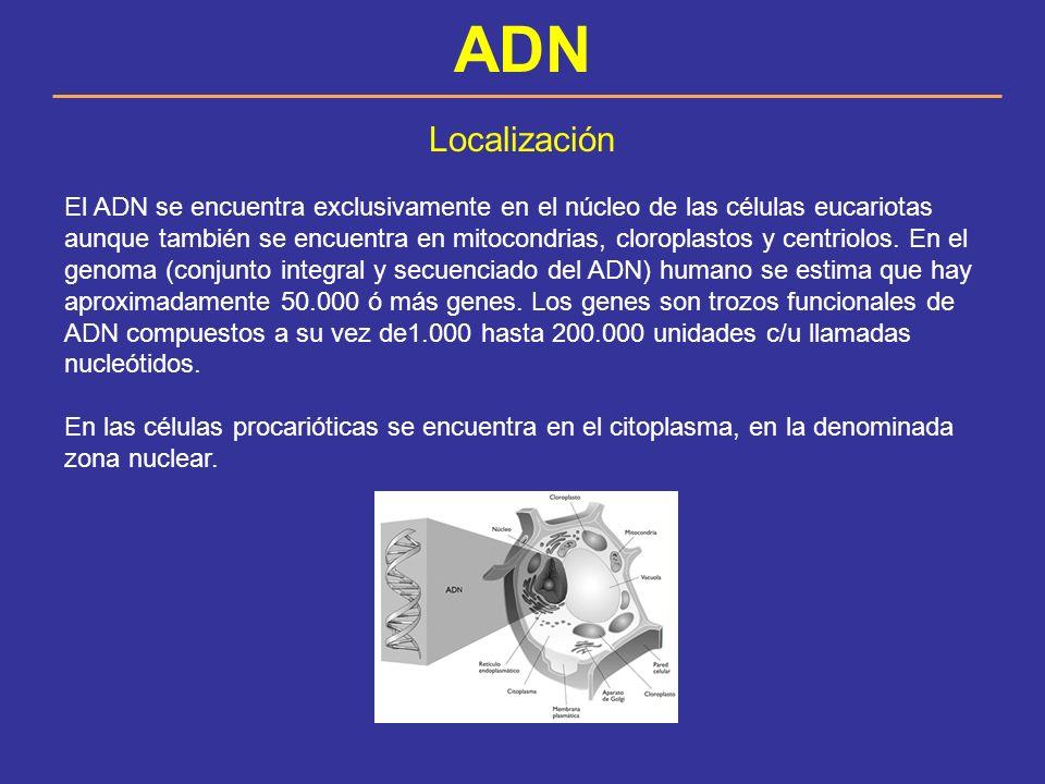 ADN Localización.
