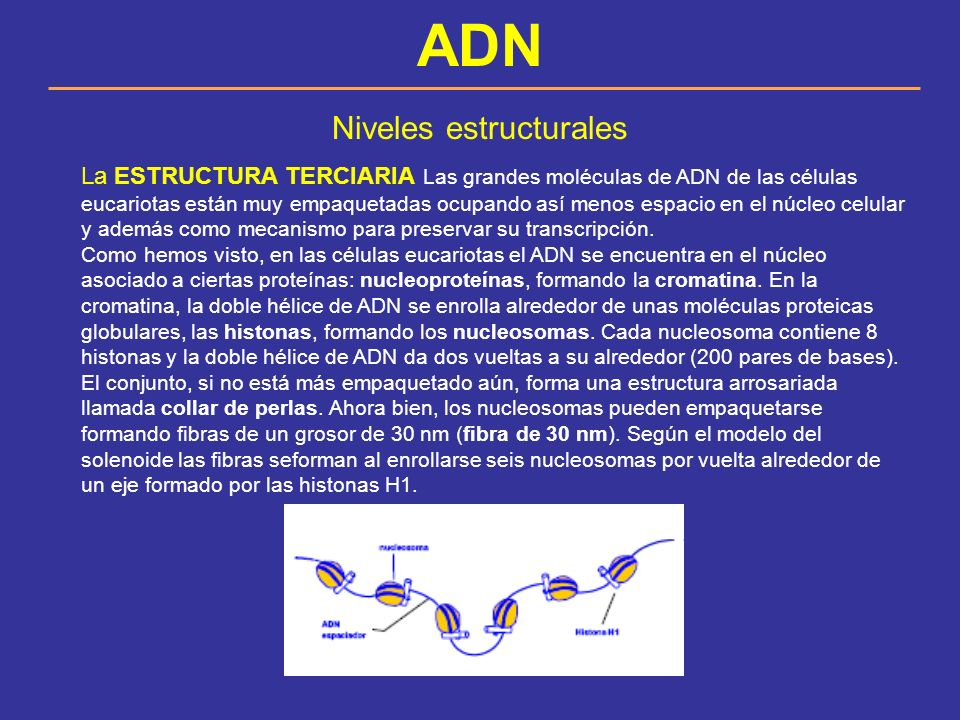 Niveles estructurales