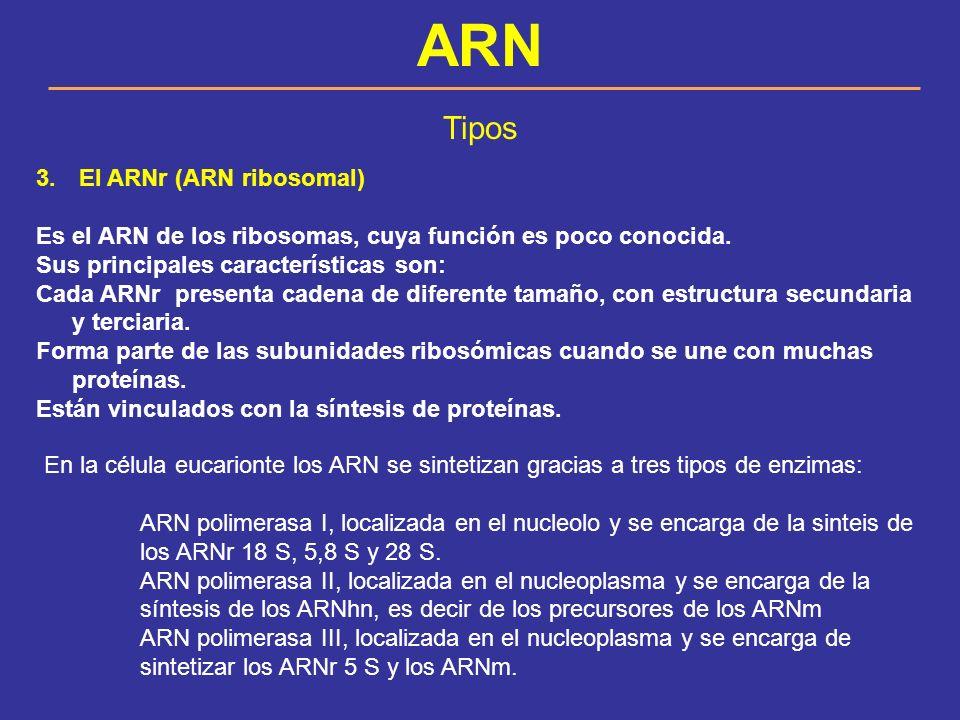 ARN Tipos El ARNr (ARN ribosomal)