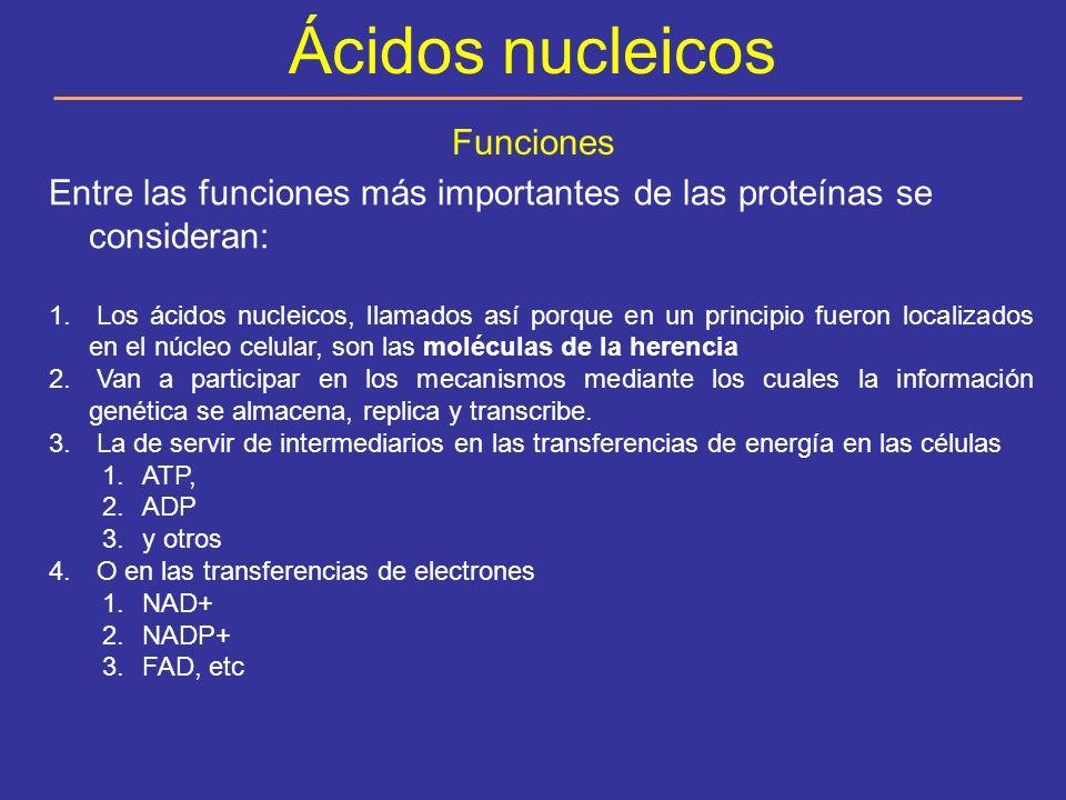 Ácidos nucleicos Funciones