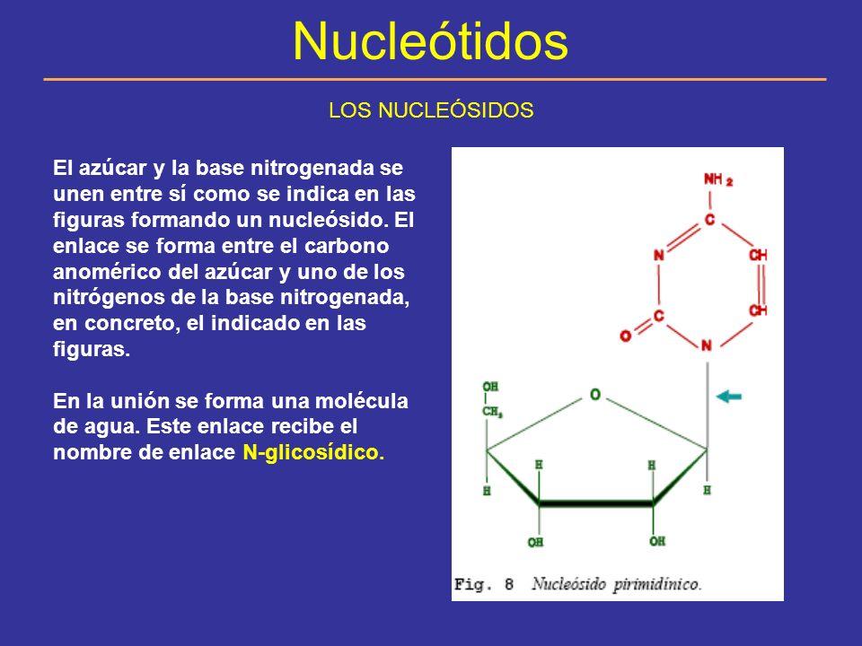 Nucleótidos LOS NUCLEÓSIDOS