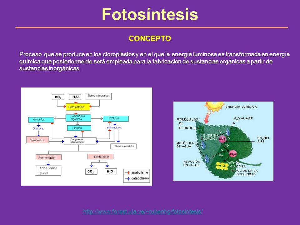 Fotosíntesis CONCEPTO