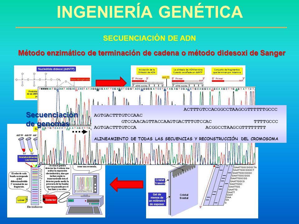 INGENIERÍA GENÉTICA SECUENCIACIÓN DE ADN