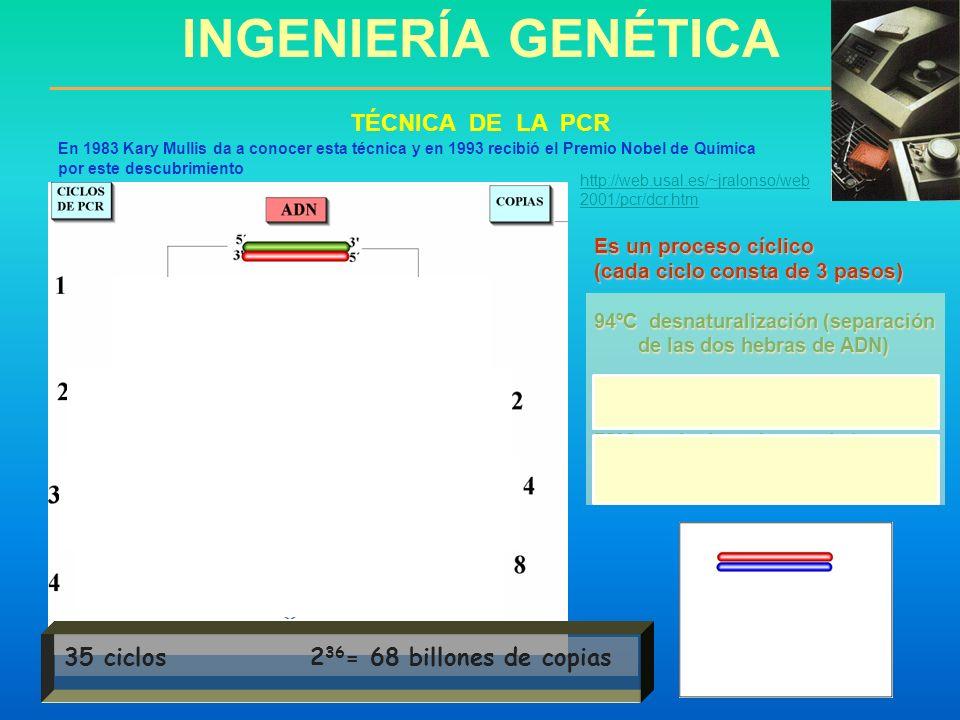 INGENIERÍA GENÉTICA TÉCNICA DE LA PCR