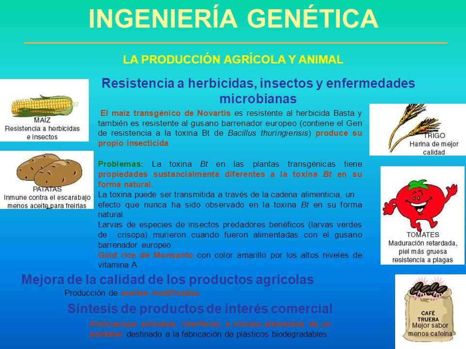 INGENIERÍA GENÉTICA LA PRODUCCIÓN AGRÍCOLA Y ANIMAL. Resistencia a herbicidas, insectos y enfermedades microbianas.