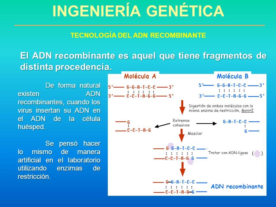 TECNOLOGÍA DEL ADN RECOMBINANTE
