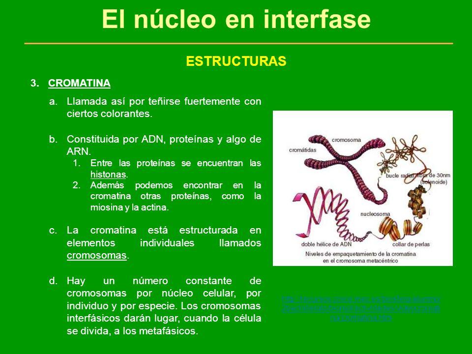 El núcleo en interfase ESTRUCTURAS CROMATINA