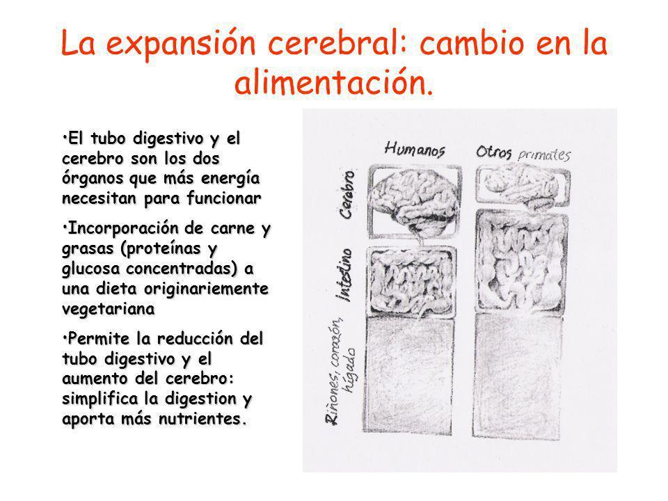 La expansión cerebral: cambio en la alimentación.