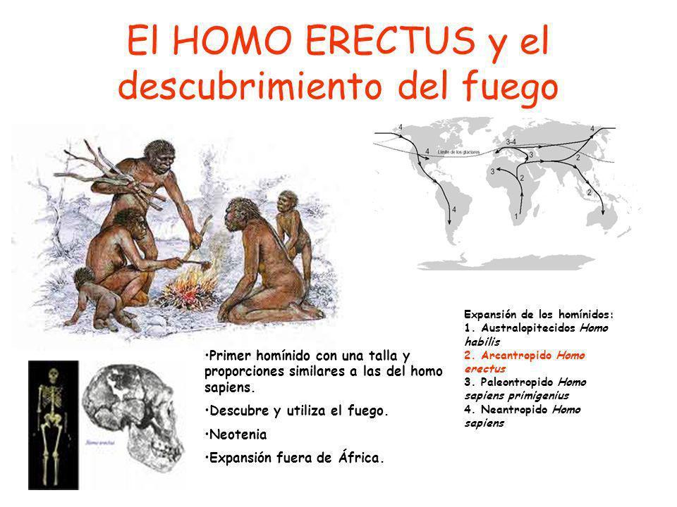 El HOMO ERECTUS y el descubrimiento del fuego