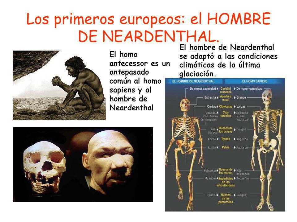 Los primeros europeos: el HOMBRE DE NEARDENTHAL.