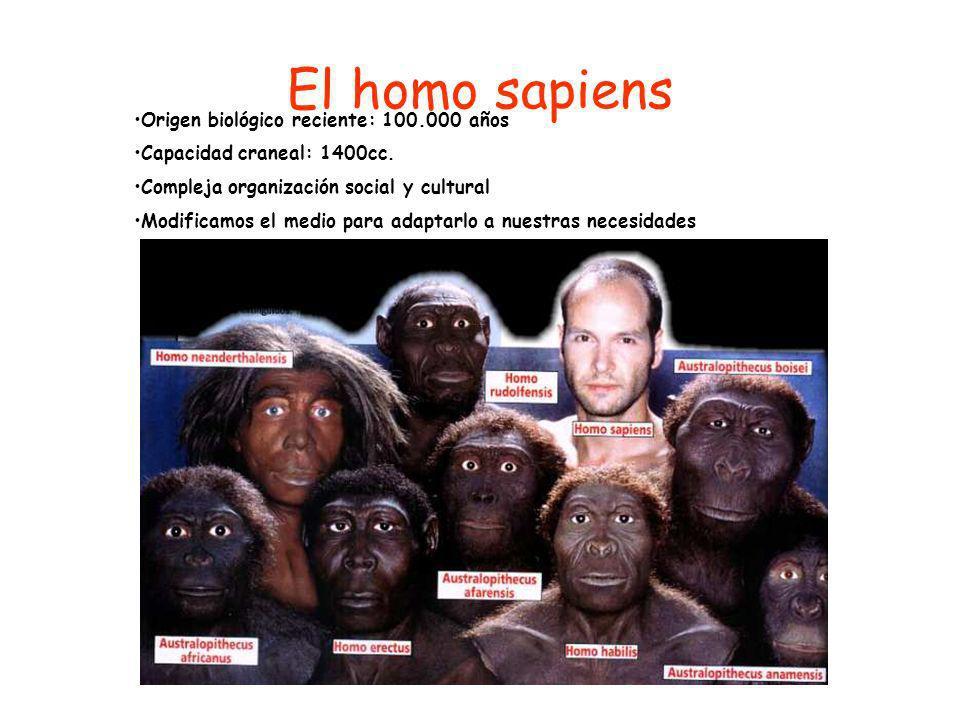El homo sapiens Origen biológico reciente: 100.000 años