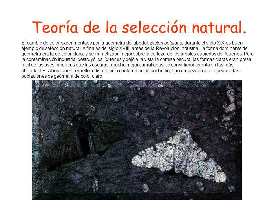 Teoría de la selección natural.