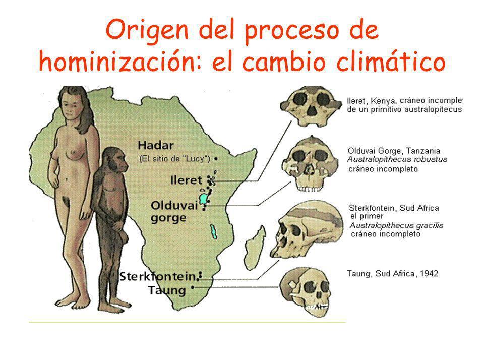 Origen del proceso de hominización: el cambio climático