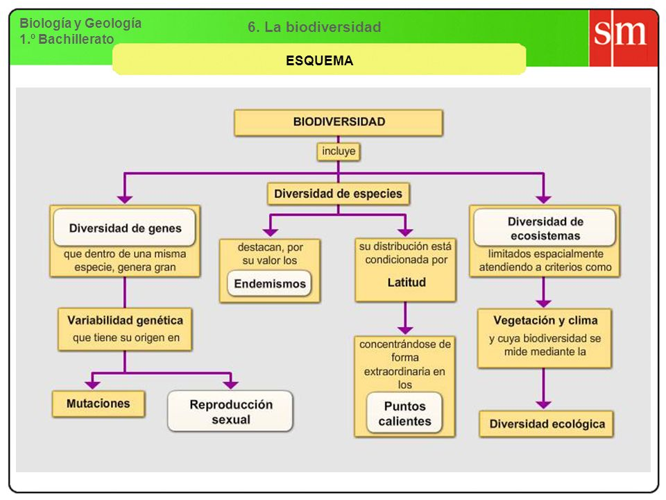 6. La biodiversidad Biología y Geología 1.º Bachillerato ESQUEMA