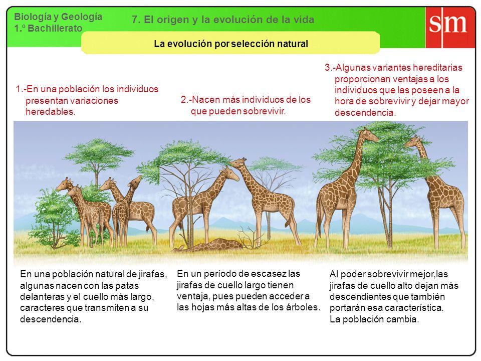7. El origen y la evolución de la vida