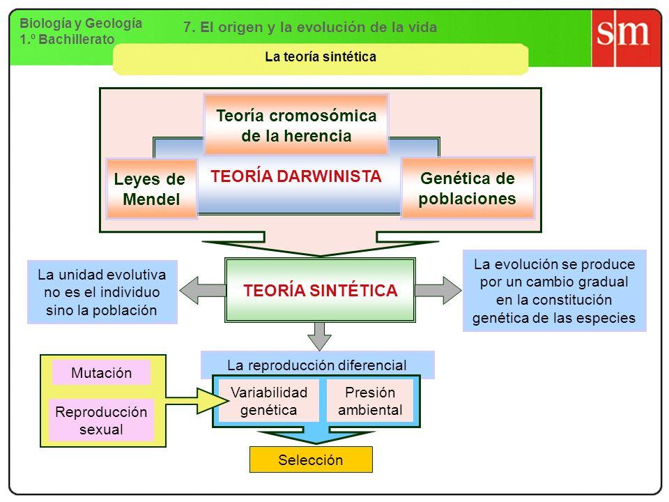 Teoría cromosómica de la herencia