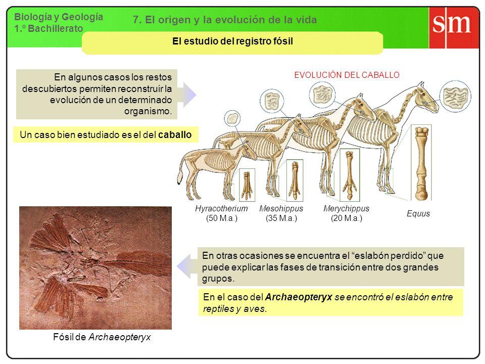 7. El origen y la evolución de la vida El estudio del registro fósil