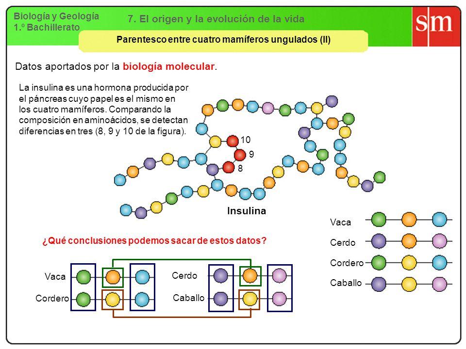 7. El origen y la evolución de la vida Insulina