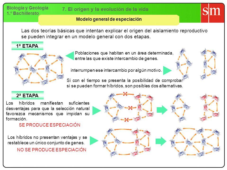 7. El origen y la evolución de la vida Modelo general de especiación