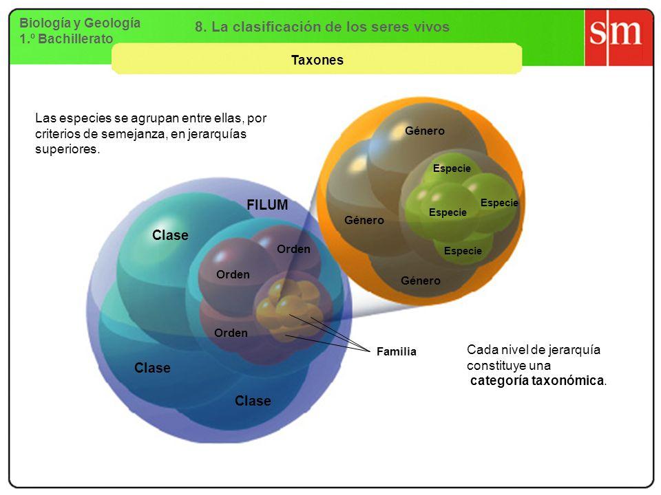 8. La clasificación de los seres vivos