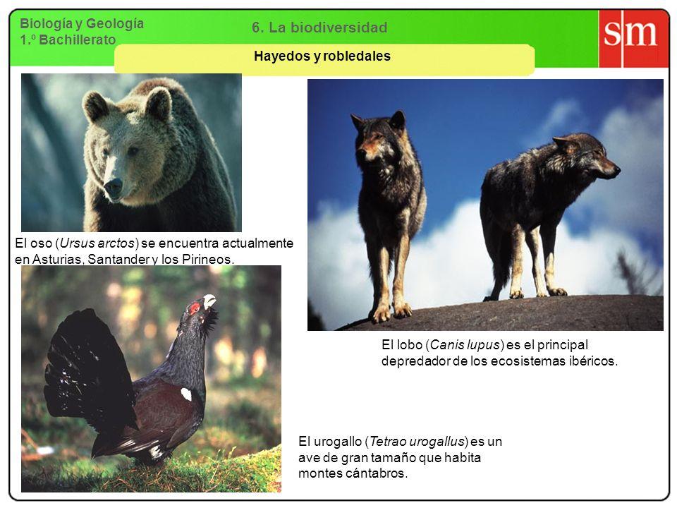 6. La biodiversidad Biología y Geología 1.º Bachillerato