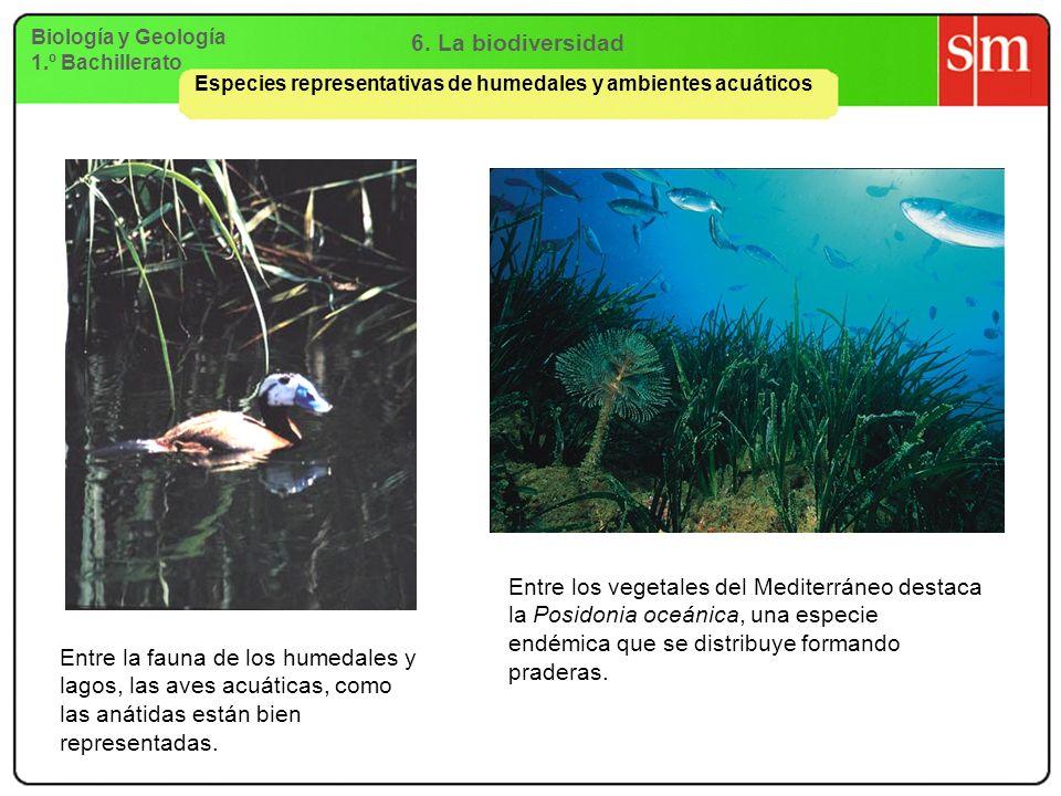 6. La biodiversidad Biología y Geología. 1.º Bachillerato. Especies representativas de humedales y ambientes acuáticos.