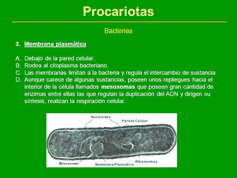 Procariotas Bacterias Membrana plasmática Debajo de la pared celular.