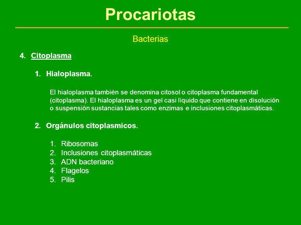Procariotas Bacterias Citoplasma Hialoplasma.