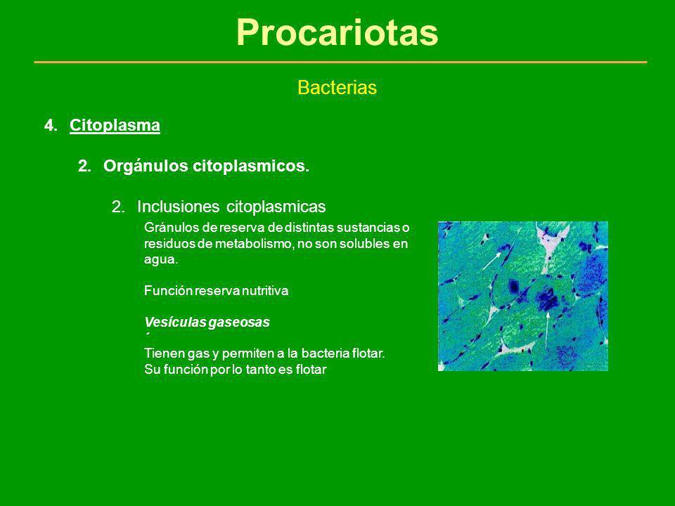 Procariotas Bacterias Citoplasma Orgánulos citoplasmicos.