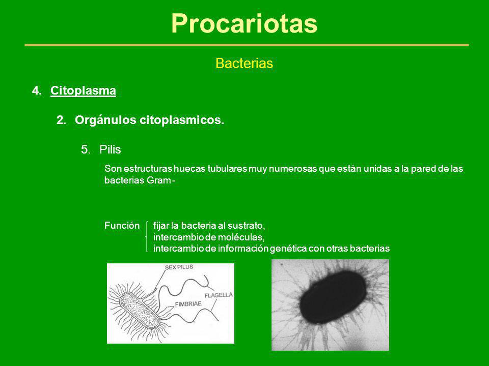 Procariotas Bacterias Citoplasma Orgánulos citoplasmicos. Pilis
