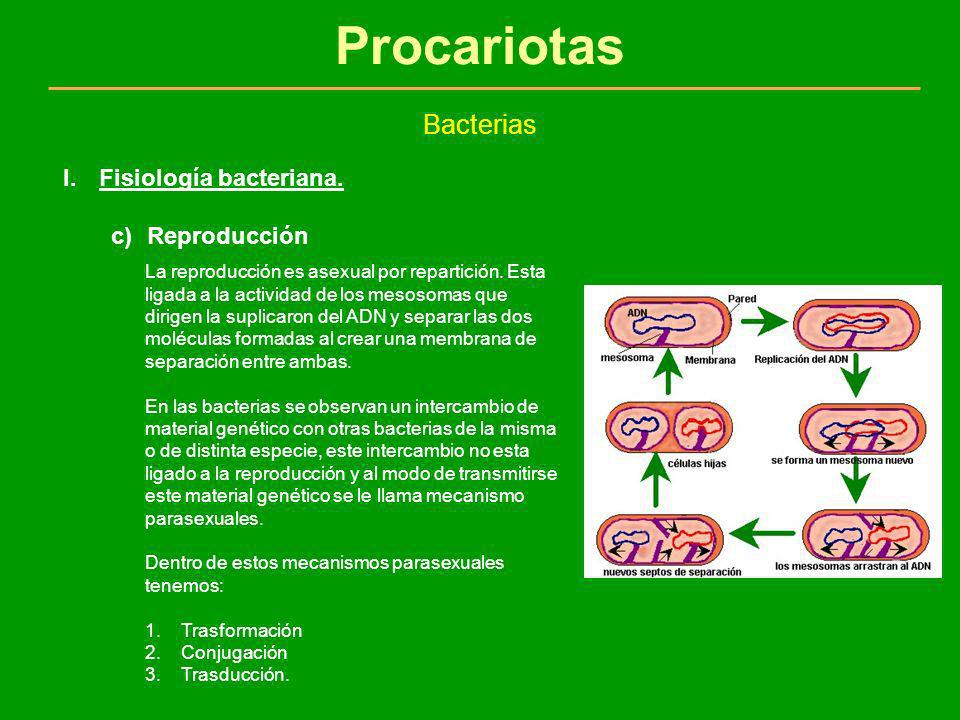 Procariotas Bacterias Fisiología bacteriana. Reproducción