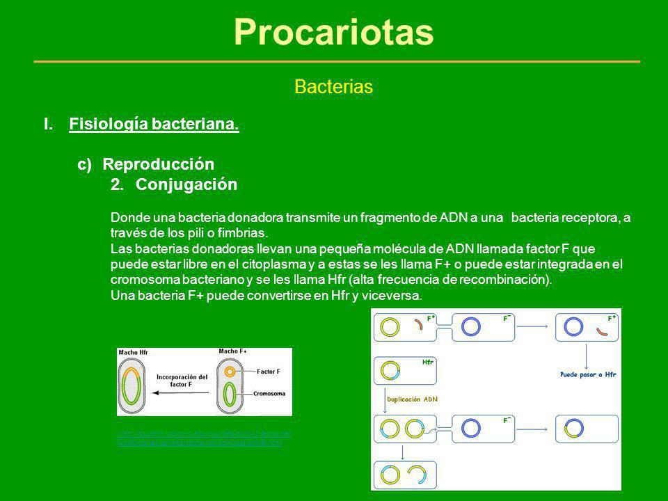 Procariotas Bacterias Fisiología bacteriana. Reproducción Conjugación